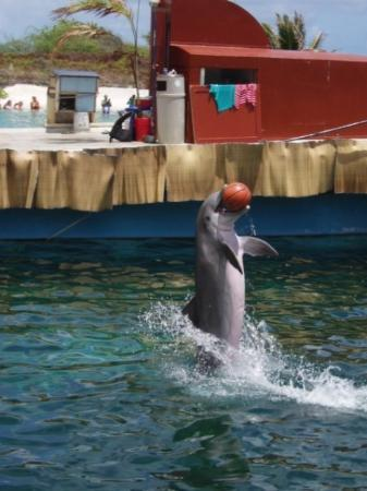 ไวมานาโล, ฮาวาย: Sea Life Park