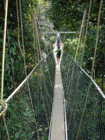 Taman Negara National Park, มาเลเซีย: Touwbrug, Taman Negara jungle, Maleisië (2008)