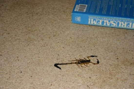 Gaia Hotel & Reserve: The 4 inch scorpion we found in our bathroom shower.  I shouldn't complain though, once we told