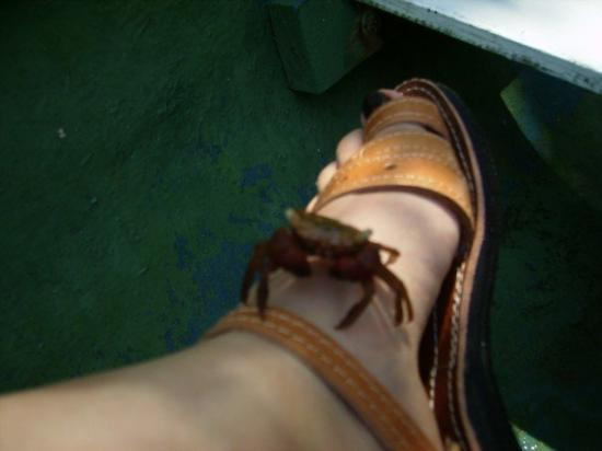 Covenas, Colombia: Un cangrejito en mi pie- Coveñas 2007