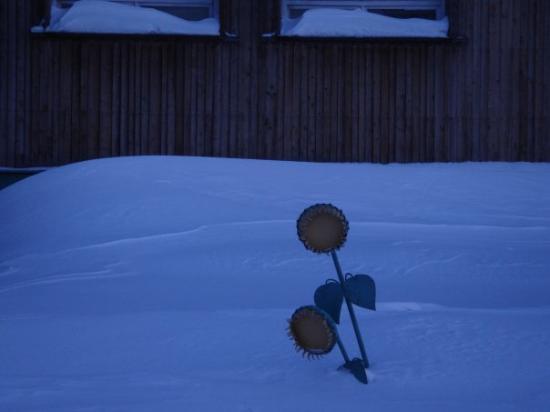 Longyearbyen, Norvège : ...da lässt selbst die Sonnenblume aus Metall den Kopf hängen!