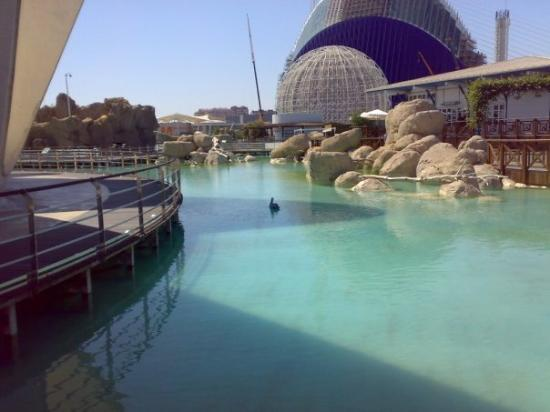 Oceanografic Valencia ภาพถ่าย
