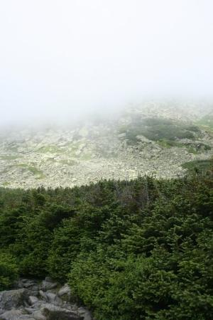 Mount Washington, นิวแฮมป์เชียร์: Tree Line.