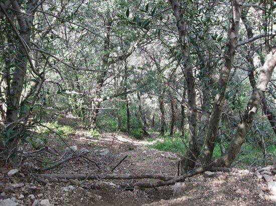 Mount Lowe Railway trail