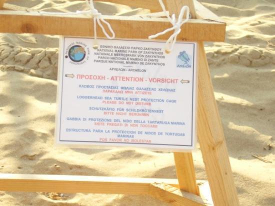 زاكينثوس, اليونان: Tartaruga marina: caretta caretta... l'unica cosa che si poteva vedere