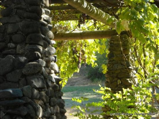 Middletown, CA: Grape Arbor