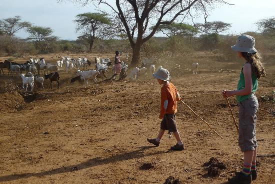 Il Ngwesi Lodge: Children at work, helping with the goat herding