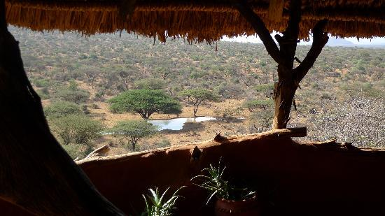 Il Ngwesi Lodge: Contant wildlife action at the waterhole below your banda