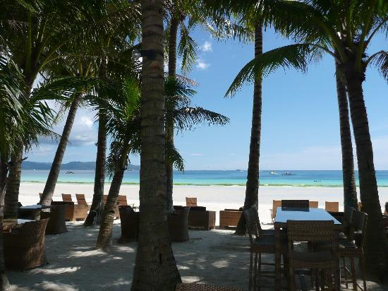 Ambassador in Paradise Resort: WHITE BEACH THROUGH THE PALM TREES