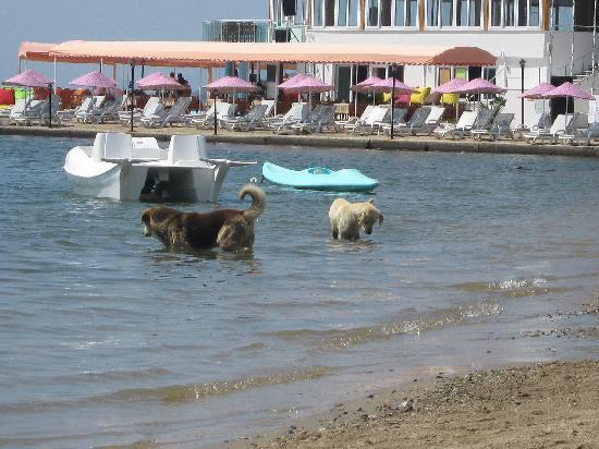 Turihan Hotel: dogs fishing - i spent ages watching them