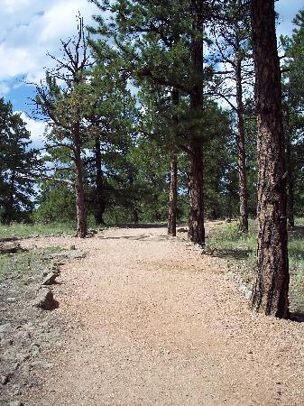 Florissant Fossil Beds National Monument: Petrified Forest trail