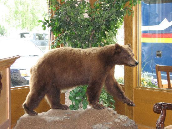Regency Fairbanks Hotel: The friendly Alaskan bear