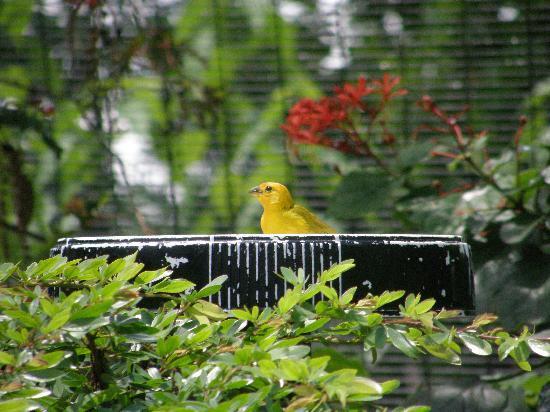 Zoo Miami: Aviary Exhibit