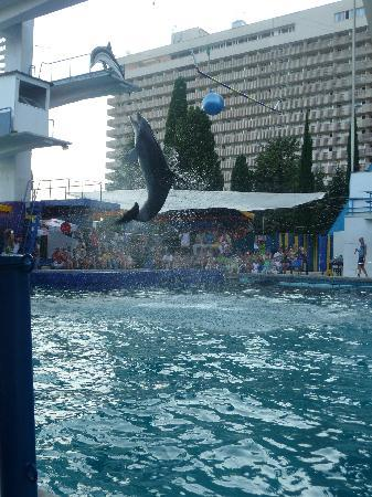 Yalta Intourist Hotel: Dolphin Show, Hotel in background