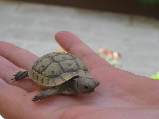 Anastasia Hotel : Baby turtle