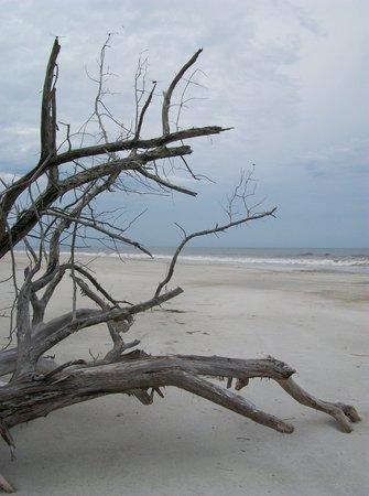 Jacksonville, Flórida: beach