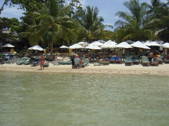 Novotel Samui Resort Chaweng Beach Kandaburi : PLAGE DE L HOTEL