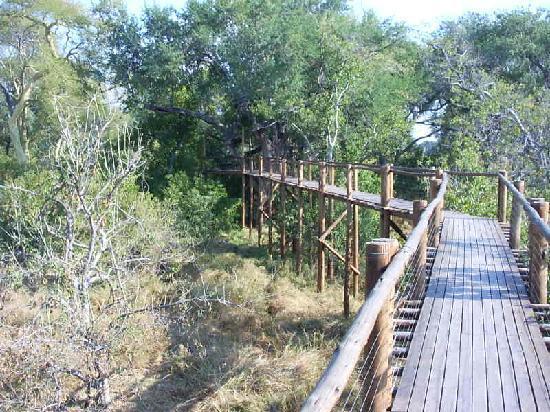 Leokwe Camp - Mapungubwe National Park: boardwalk at mapungubwe national park