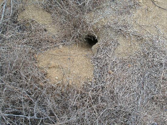Parque Ecologico Palo Santo: lizard hole