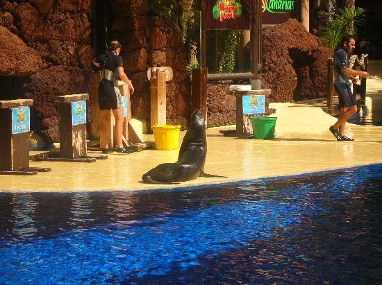 Broncemar Beach: oasis sea lion show