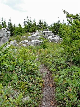 Dolly Sods Wilderness Area : Trail on Rocky Ridge
