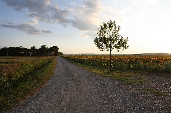 Cortona Resort - Le Terre dei Cavalieri : Le chemin qui mène à l'hôtel