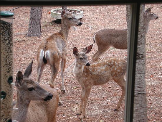 Wild Ginger Cafe: deer