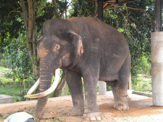 Sri Lanka: Rescued elephant