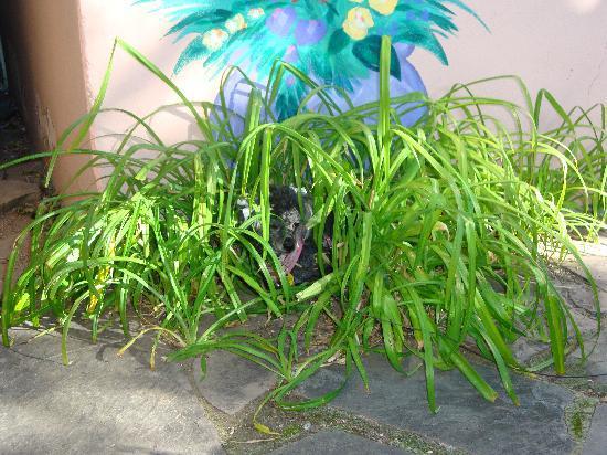 Inn on the Rio: Ronnie enjoying the plant life
