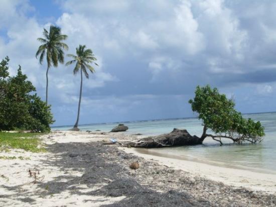 กวาเดอลูป: La Plage de Bois Jolan (Ma préférée) à Ste Anne - Grande Terre