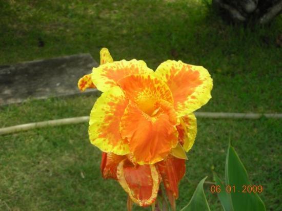 Itacimirim: chi sa dirmi come si chiama questo fiore?