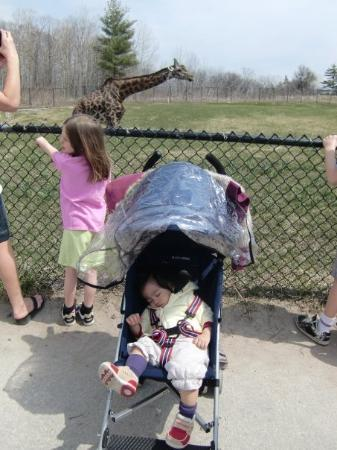 Toronto Zoo: I passed out... so I missed the giraffe...
