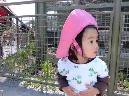 Toronto Zoo ภาพถ่าย