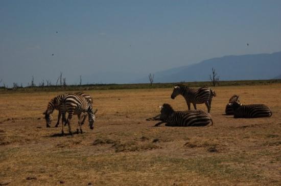 Arusha Photo