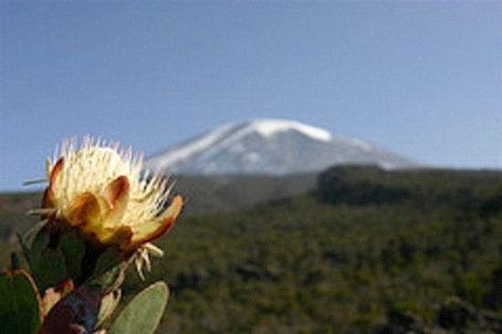Kilimanjaro National Park, แทนซาเนีย: Kilimandjaro 6000m