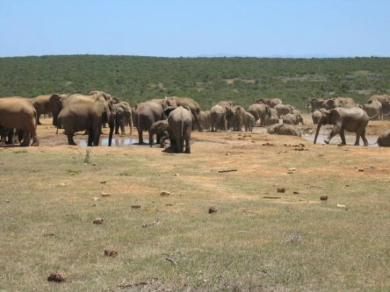 Addo Elephant National Park, แอฟริกาใต้: Addo Elefantpark