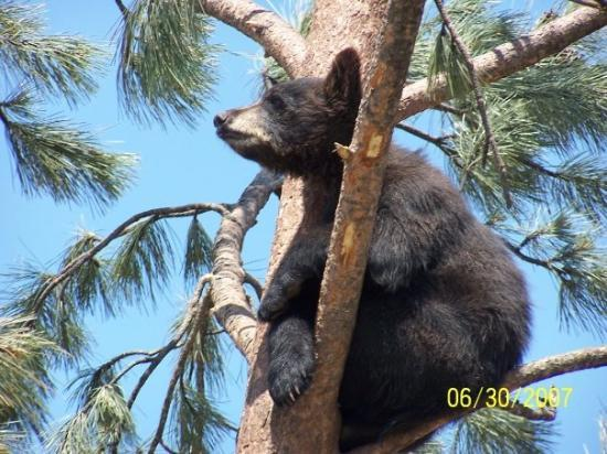 Bear Country USA: Bear Country, SD