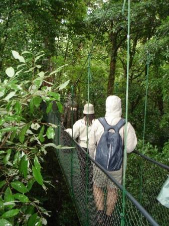 Monteverde Cloud Forest Reserve, คอสตาริกา: I regnskogen har de bygg långa hängande broar så man kan ta sig runt högt uppe bland träden.