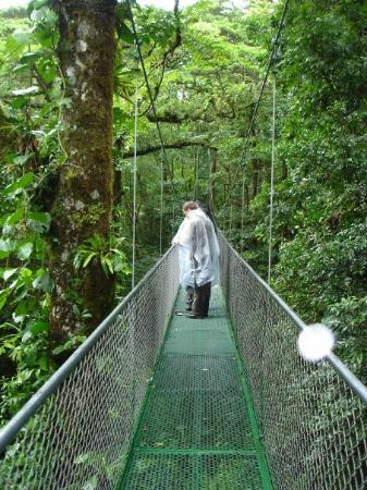 Monteverde Cloud Forest Reserve, คอสตาริกา: Den högsta bron.
