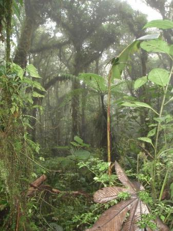 Monteverde Cloud Forest Reserve, คอสตาริกา: Inne i Santa Elena Cloud Forest Reserve.