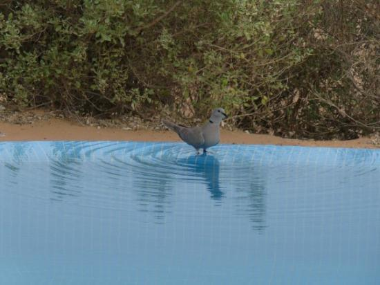 Al Maha, A Luxury Collection Desert Resort & Spa: Kneipkur 42 °C
