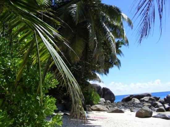 Isla de Mahé, Seychelles: Trees!!