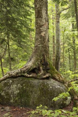 Mont Tremblant, แคนาดา: intéressant