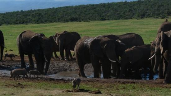 Addo Elephant National Park ภาพถ่าย