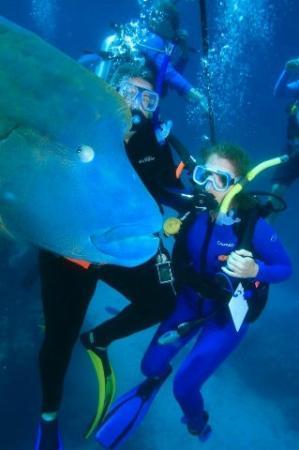 พอร์ตดักลาส, ออสเตรเลีย: B & B diving with Marvin, a 65 yr old wrasse. He was VERY friendly!