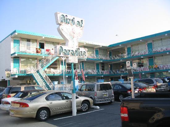 Bird of Paradise Motel照片