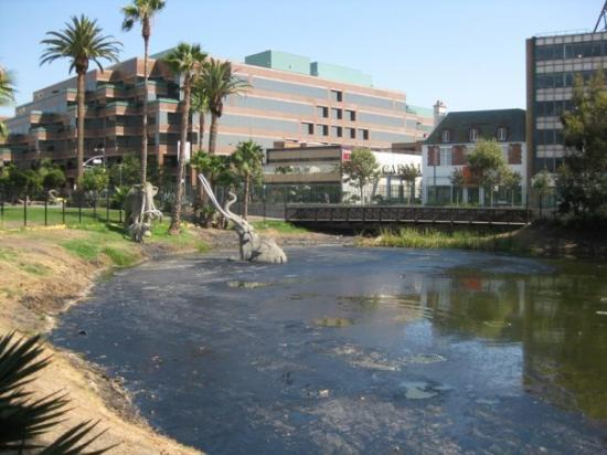 La Brea Tar Pits and Museum: The La Brea Tar Pits.  It looked gross, smelled like fresh tar on a rooftop, and was still bubbl