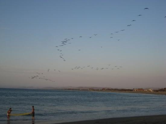 Pelicans flying overhead - view from our beachfront hotel in Mancora