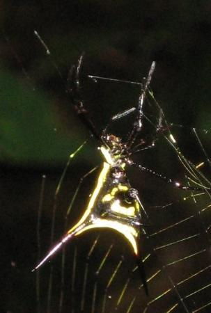 Yasuni National Park, Ecuador: Spider, Amazon jungle