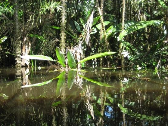 Yasuni National Park, Équateur : Boat excursion around the lake, Amazon jungle